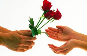 डेढ लाख रातो गुलाब भारतबाट ल्याइने