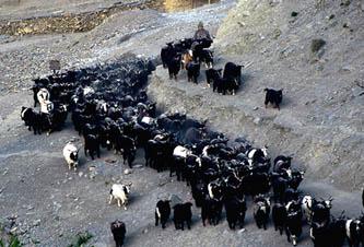 स्रोह हजार भेडाच्याङ्ग्रा निर्यात