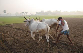 भूकम्पको चोटपछि भारतको नाकाबन्दीले कृषि क्षेत्र धराशायी हुँदै