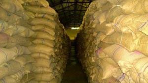राहतका लागि आएको ६१ हजार क्विन्टल चामल गोदाममै