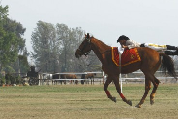 घोडे जात्रा- २०७२